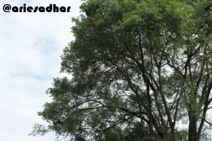 Pohon dan Angsa (Kelihatan Nggak?)