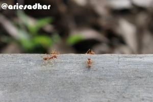 Semut Aja Nggak Sendirian