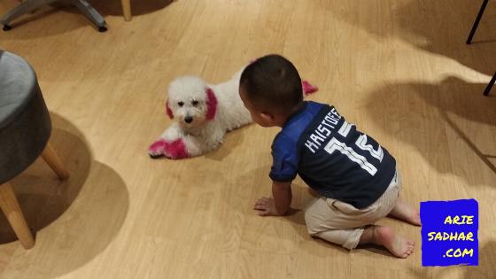 cara memelihara anjing